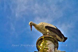 Storch auf dem Mast