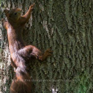Eingebildetes Eichhörnchen im Rosensteinpark