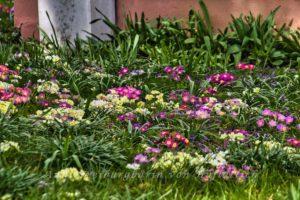 Frühlingsbunt vor trister Hauswand