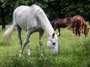 Drei Pferde bei Schloss Solitude