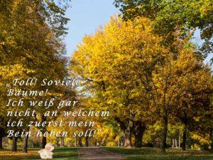 Der Rosensteinpark von seiner vielfältigen Seite