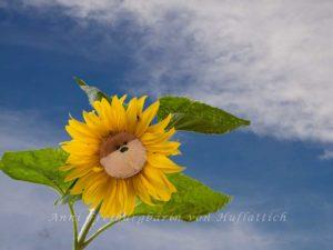 Lecker Sonnenblümkes