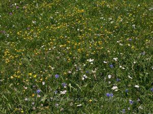 Die Trockenwiesen im Rosensteinpark